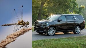 09/2020, 2021 Chevrolet Tahoe und Eintagsfliege