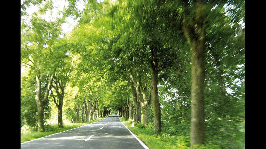 Allee, Bäume