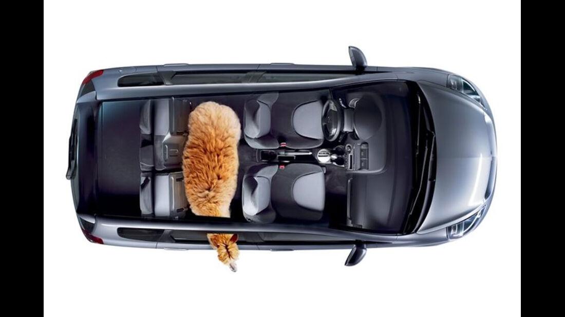 Alpaka im Honda Fit (Honda Jazz)