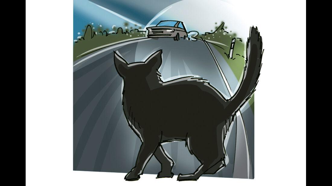 Anbieterwechsel, Katze, Straße