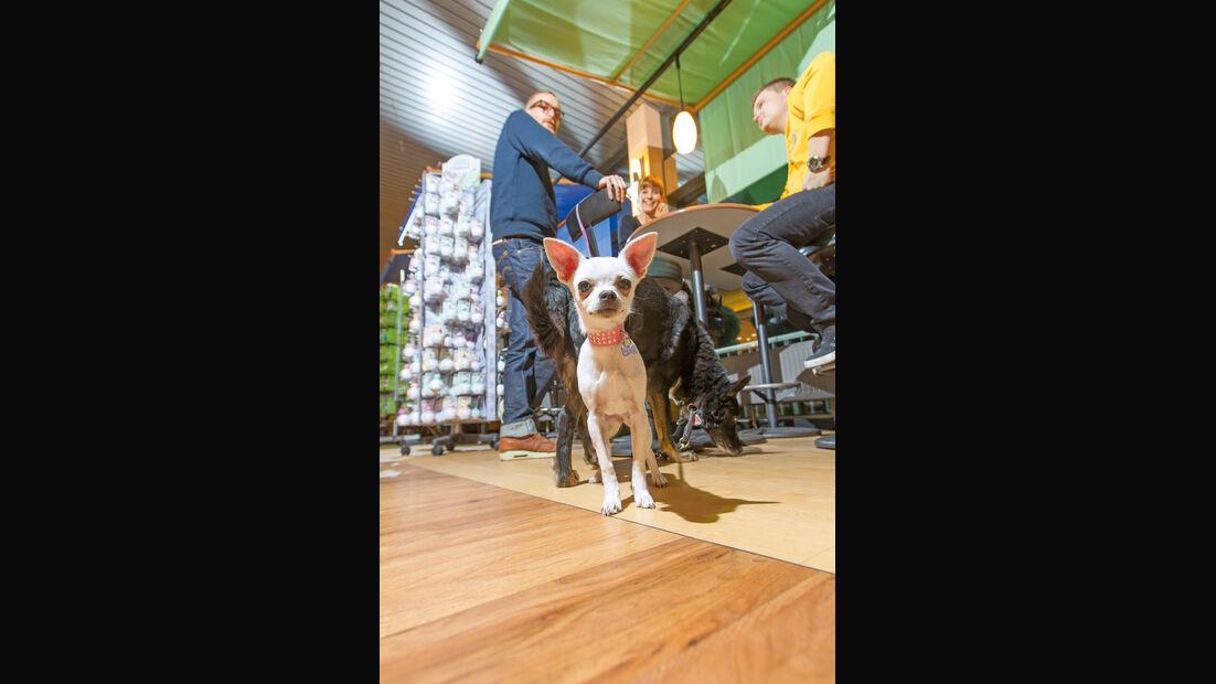 Autobahn-Raststätte, Restaurant, Hund