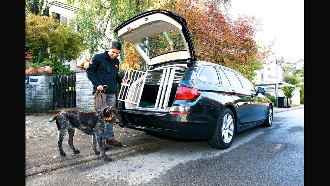 BMW 528i Touring, Hundetransport