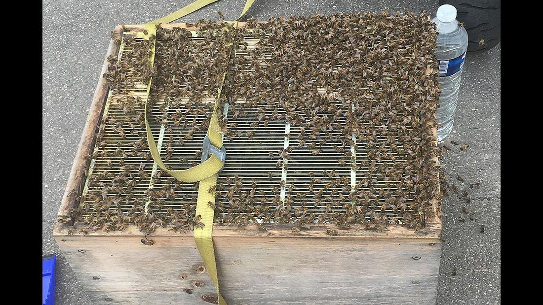 Bienen am Auto