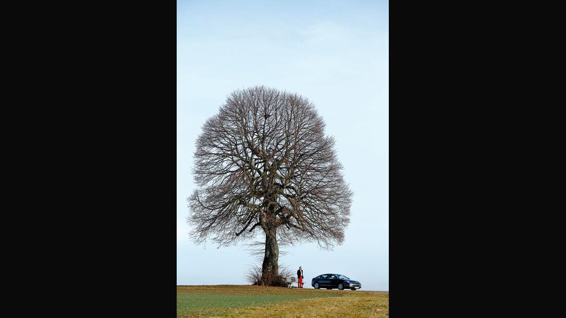 Citroën C6, Seitenansicht, Baum