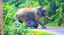 Elefant Toyota Corolla