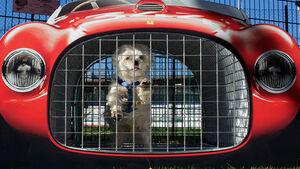 Ferrari Museum Hundebox