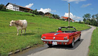 Ford Mustang, Alm, Kuh