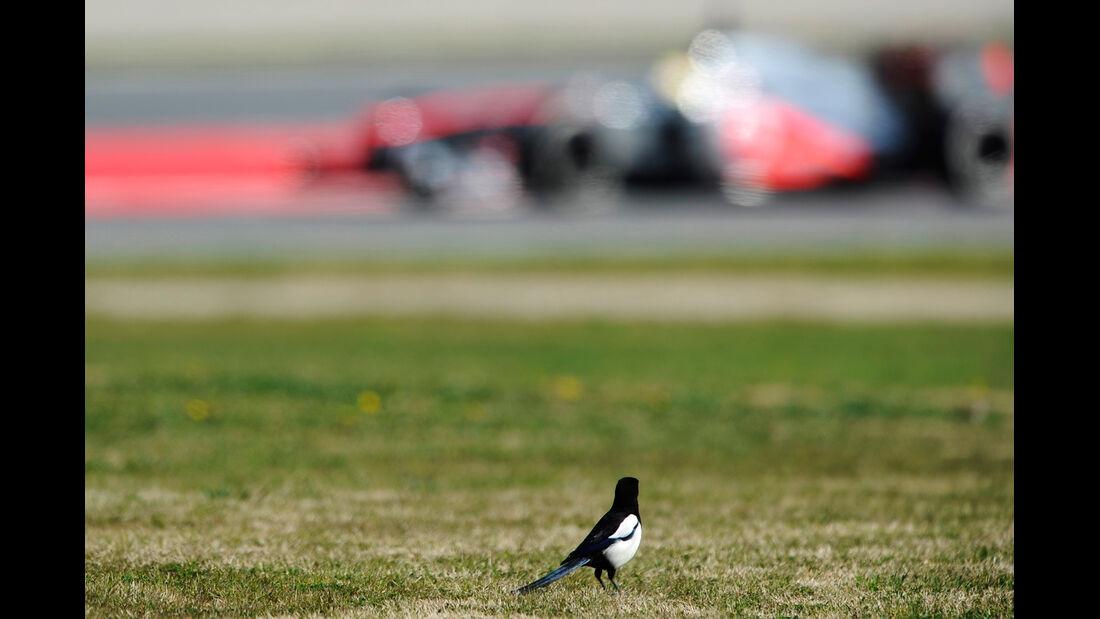 Formel 1 - Test - Barcelona - 2. März 2013