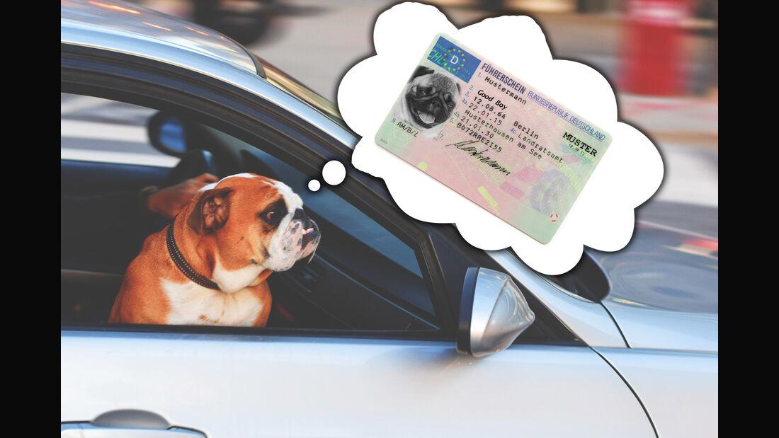 Führerschein Prüfung Engpass Hund