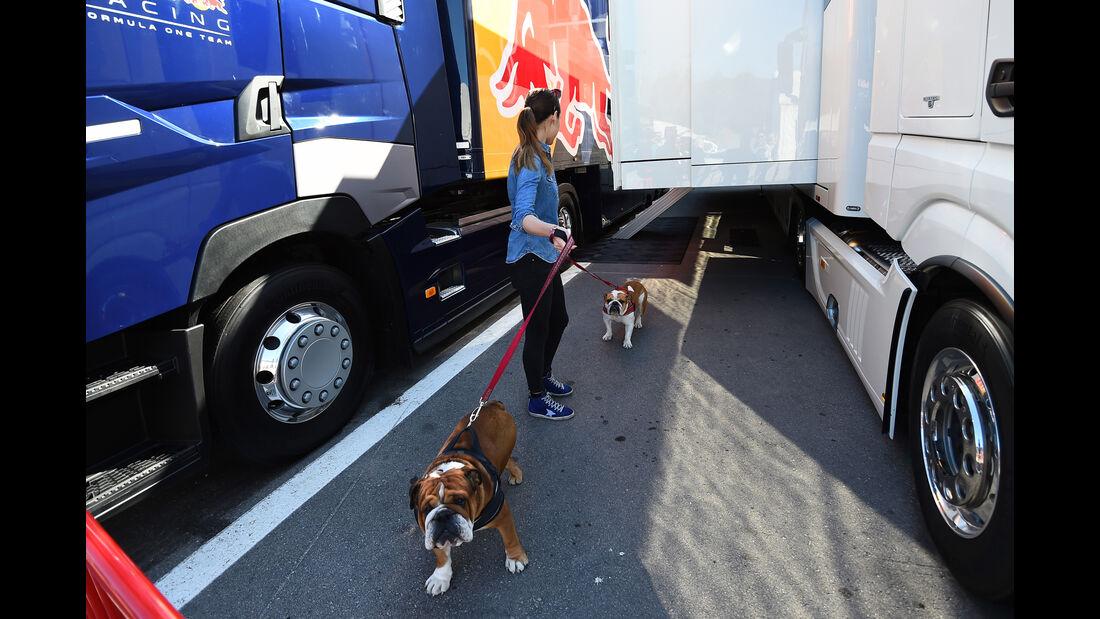 Hamilton-Hunde - Formel 1 - Test - Barcelona - 2. März 2016