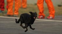 Hund - GP Indien - Training - 28.10.2011