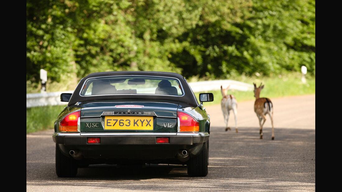 Jaguar XJ SC, Heckansicht