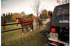 Jeep Wrangler, Pferde