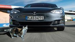 Katze Tesla Model S