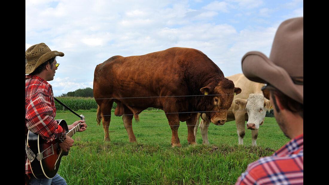 Kühe, Cowboys