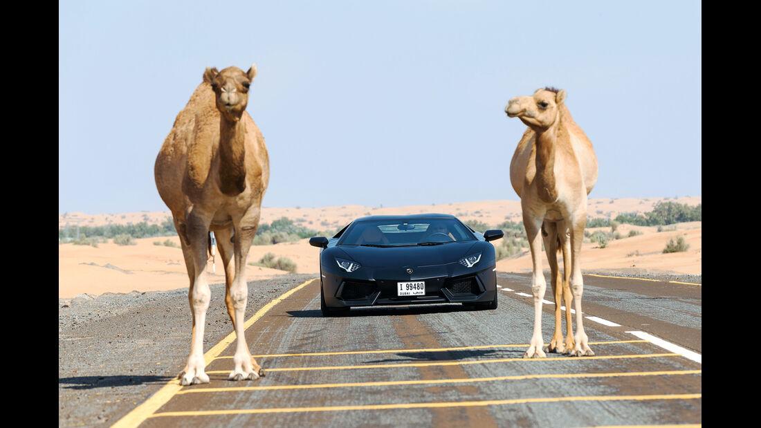 Lamborghini Aventador LP 700-4, Frontansicht, Kamele