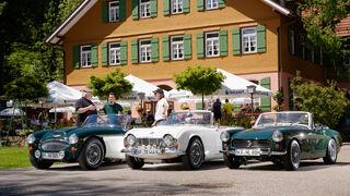 MG Midget, Triumph TR4, Austin-Healey 3000, Frontansicht