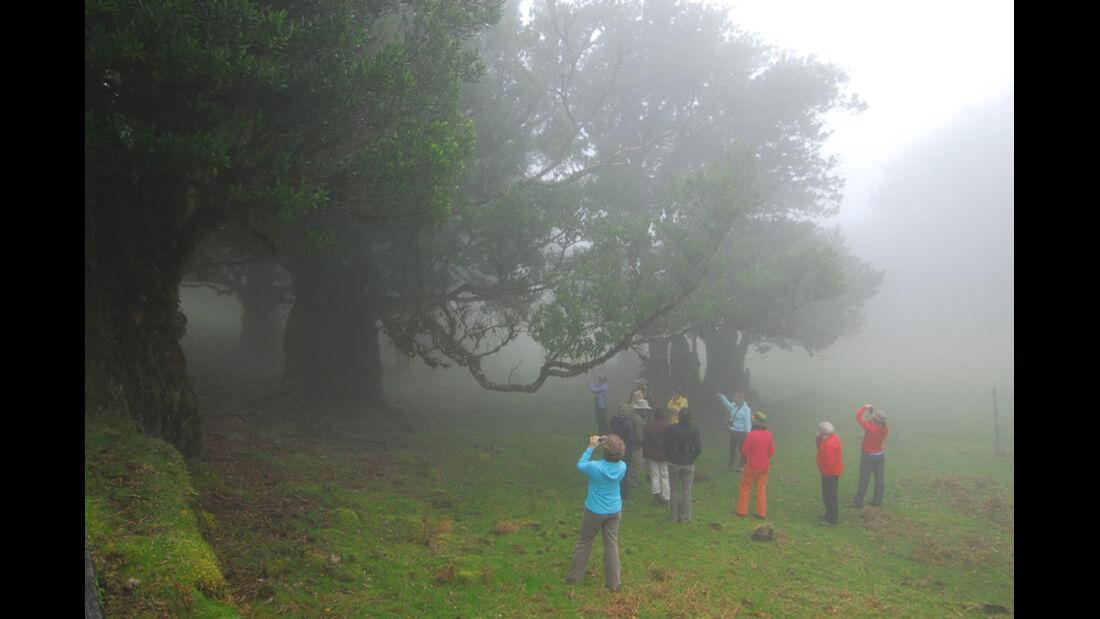 Madeira, Lorbeerwald