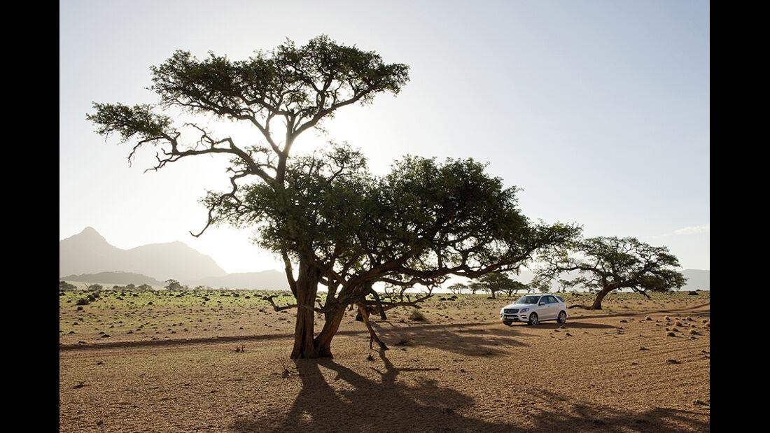 Mercedes M-Klasse, Safari