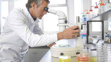 Mikroskopuntersuchung in einem Labor
