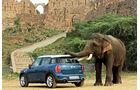 Mini Elefant