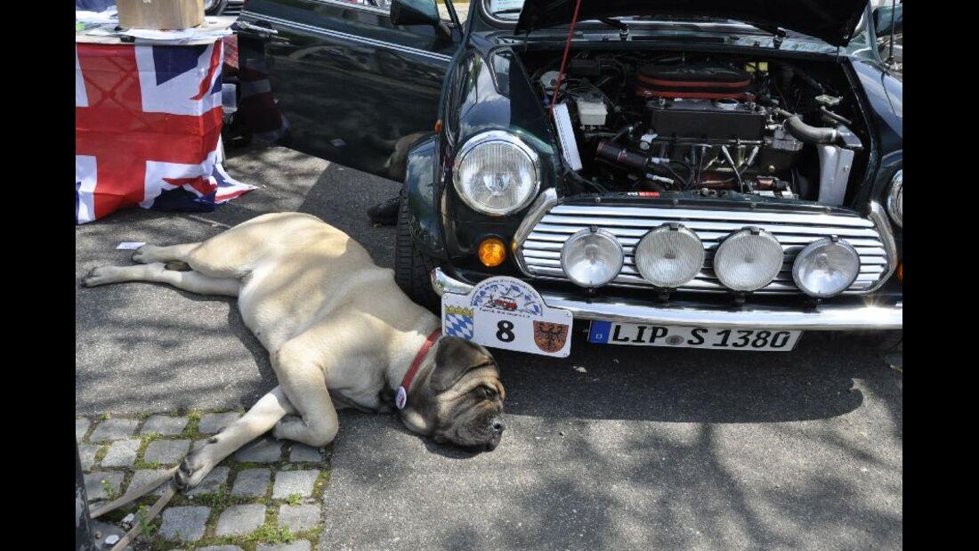 Mini mit Hund