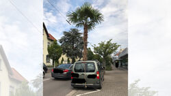 Palme Transport Auto