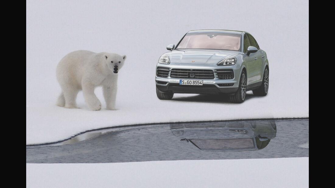 Porsche CO2 Ausgleich Green Collage Dschungel Eisbär