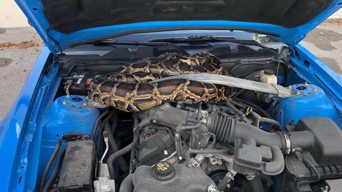 Python unter Motorhaube