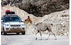 Range Rover auf Landstraße