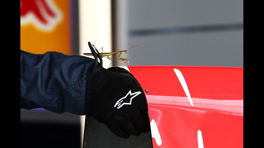 Red Bull - Formel 1 - GP Japan - Suzuka - 25. September 2015