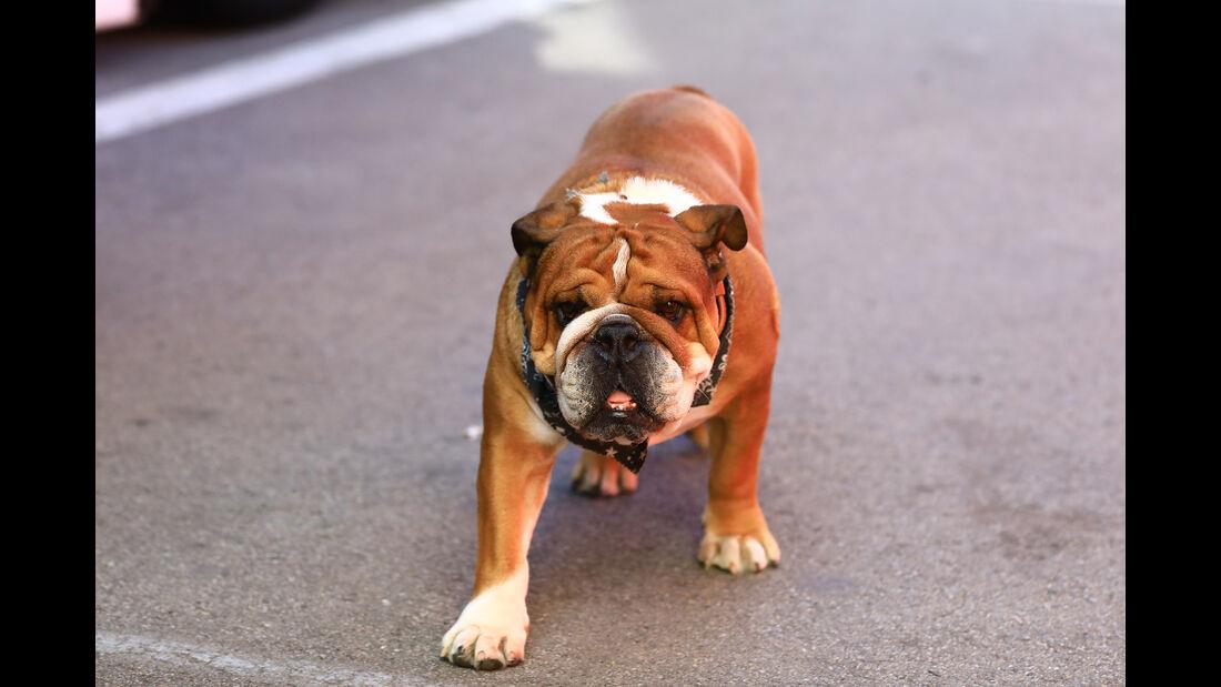 Roscoe - Hamilton-Hund - Barcelona - F1-Test - 28. Februar 2019