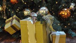 Rund 3,5 Millionen aktiven Caravan- und Reisemobilfans in Deutschland müssen nicht lange nach Weihnachtsgeschenken suchen.