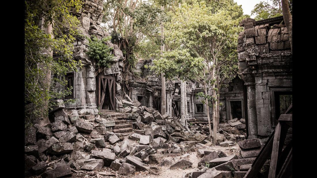 Tempelanlage Angkor im Urwald