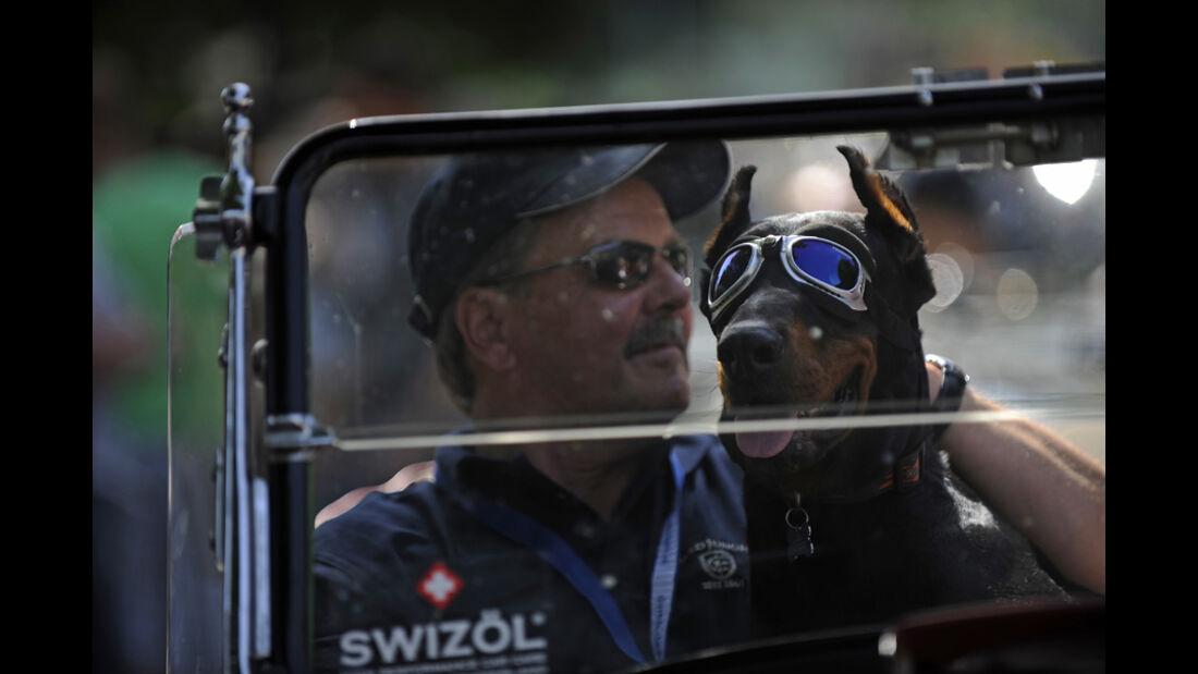 Tierischer Beifahrer bei der Silvretta Classic 2010