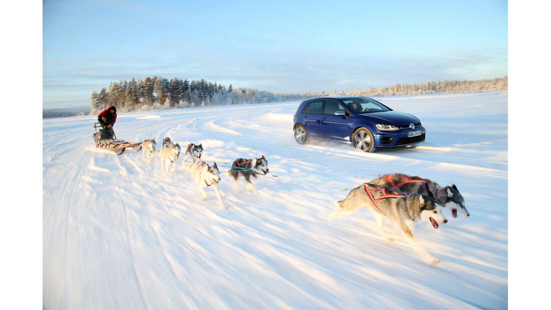 VW Golf R, Frontansicht, Hundeschlitten