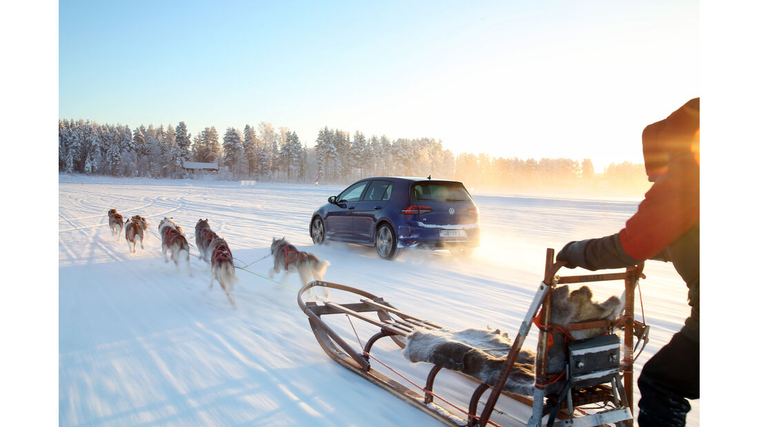 VW Golf R, Heckansicht, Hundeschlitten