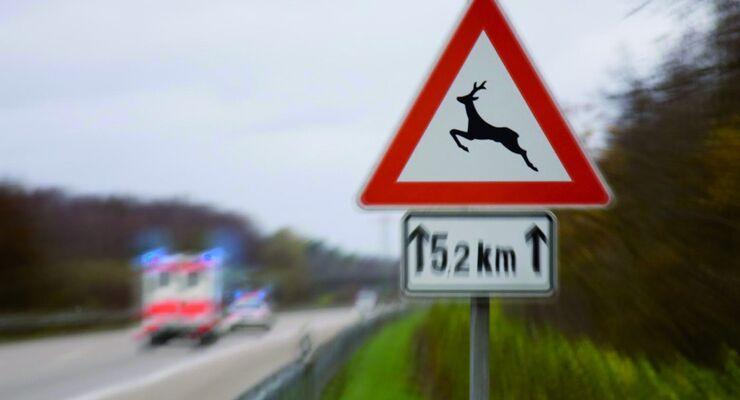 Versicherer registrieren 2012 so viele Wildunfälle wie nie zuvor.