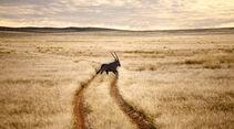 WÜSTE GEGEND, Antilope