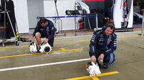 Williams - Formel 1 - GP England - Silverstone - 5. Juli 2014